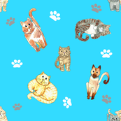 Random Cats on turquoise