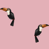 Toucans Pink
