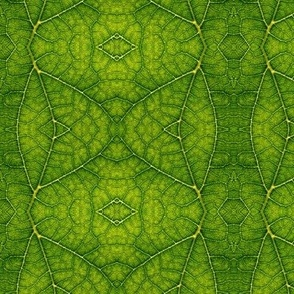 leaf_texture_pattern_nature