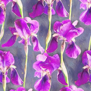 Painted Irises in Warm Magenta