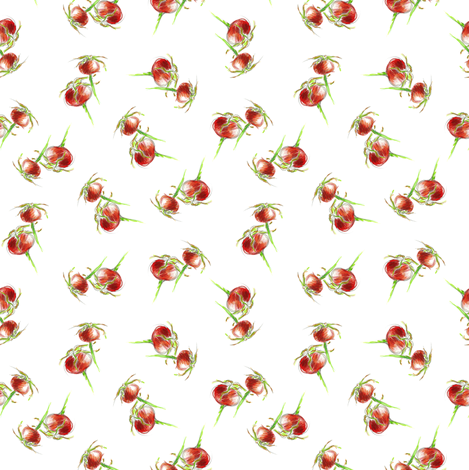 Rosehip sprig