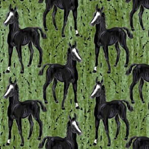 Black Foal on Greens