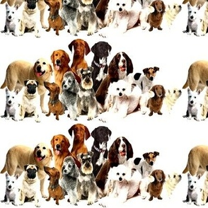 dogs_puppy_canine_animal_