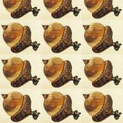 Acorn (oak nut)