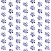 Corn_flower_petals