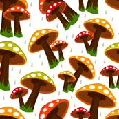 rainy-season-background mushrooms toadstools