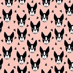 boston terriers // pink girls sweet mini dog dog faces dog breeds