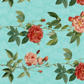 Antique_Roses_in_rows_on_Blue