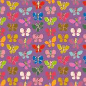Butterflies-10