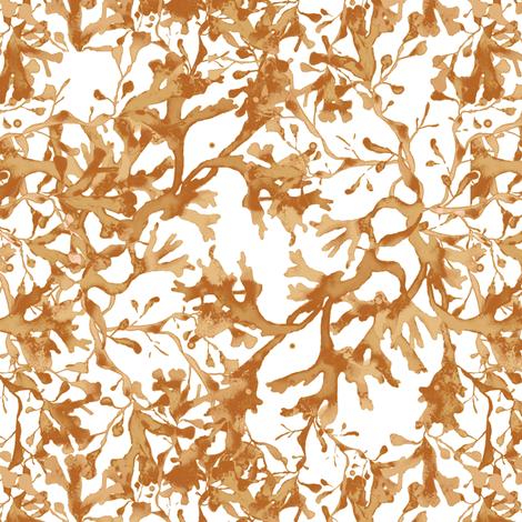 Seaweed in brown