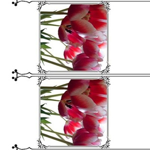 framed tulips - caged