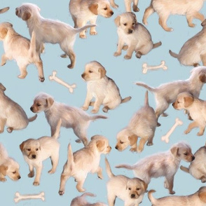 Too Many Puppies