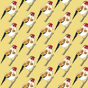 Little Goldfinch