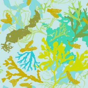 Botanical Beach Seaweed - lotsa green