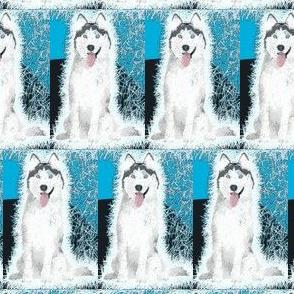 Frosty husky