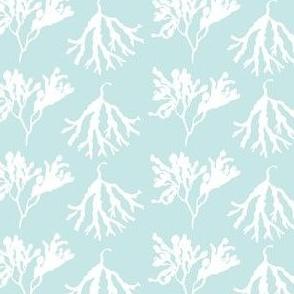 Seaweed Shimmy