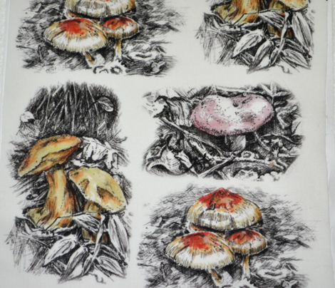 Mushrooms, Pen and Ink