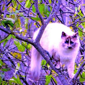 ROXY CAT WEB