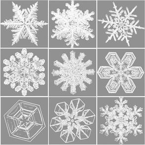 snowflakes11