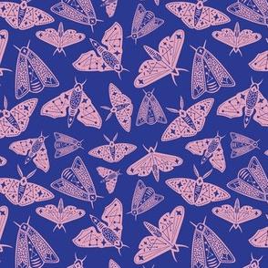Moth Universe