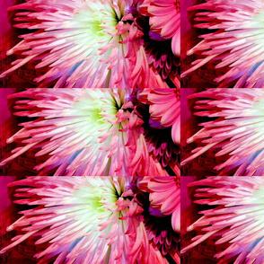 pink_burst_painted_darker_copy
