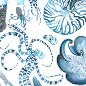 Rrrrcephalopods_shop_thumb