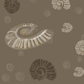 Ancient Ammonites Fossils Cephalopods Copper