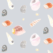 Rrrrcephalopods__shells_shop_thumb