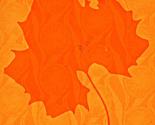 Rrrbig_leaf_ed_ed_thumb
