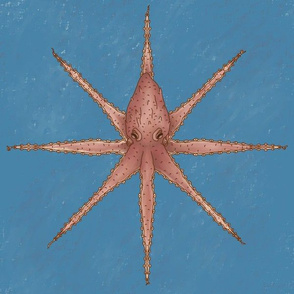 Octopus Symmetry - Sea