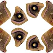 polyphemus moth costume fabric