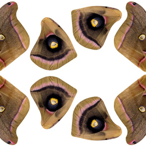 polyphemus moth costume fabric