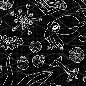 Cephalopods: Black & White
