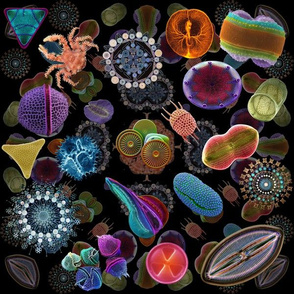 Diatom_collage