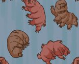 Rrtardigrade_thumb