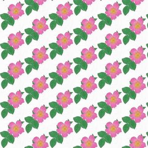 Wild Rose-ed-ed-ed