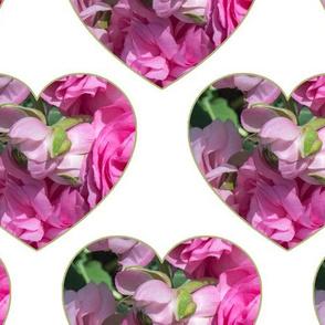 ranunculus hearts