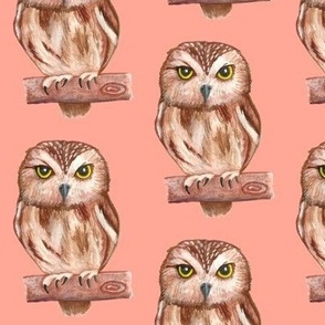 Owls Pink-Orange