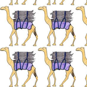 Camels of Dire Dawa