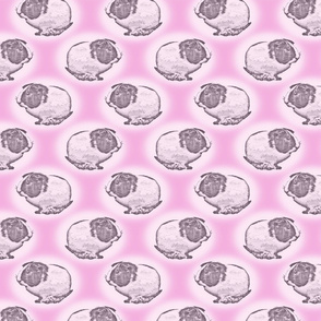 guinea pig dots - pink