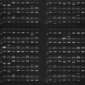 PCR-DNA