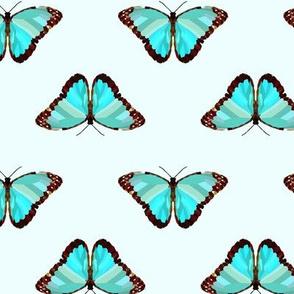 Butterfly Blue Specimen