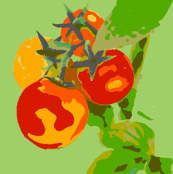 Cherry Tomatoes Two