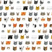 Cats_we_Love