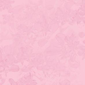 Pink Sedum
