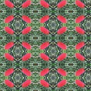 Scarlet Bottlebrush (Ref. 4805)