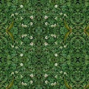 Clover Circles (Ref. 4621)