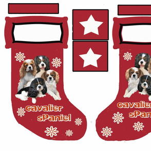 new_cavalier_spaniel_Stocking-ch