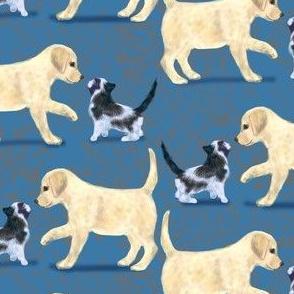 Yellow Labrador Retriever and kitten