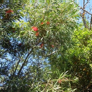 Tree Magic (Ref. 4857)